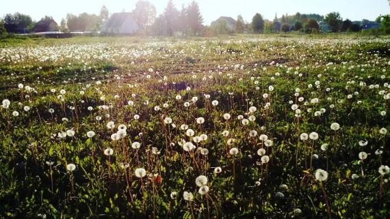 Краски лета: ручей на Лесной поляне